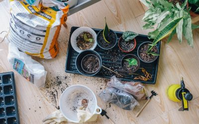 Dig Into These Gardening Trends