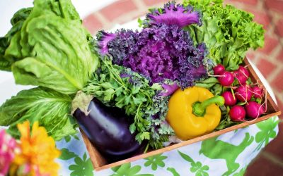 10 Tips to Prepare Your Garden for Spring